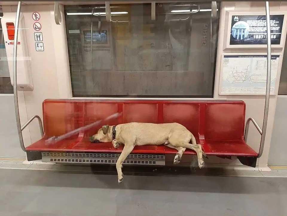 chien errant utilise les transports en commun
