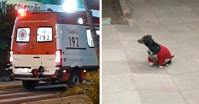 chien fidèle monte ambulance suivre père