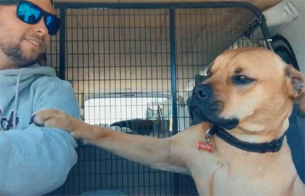 chien sauvé donne main nouveau papa