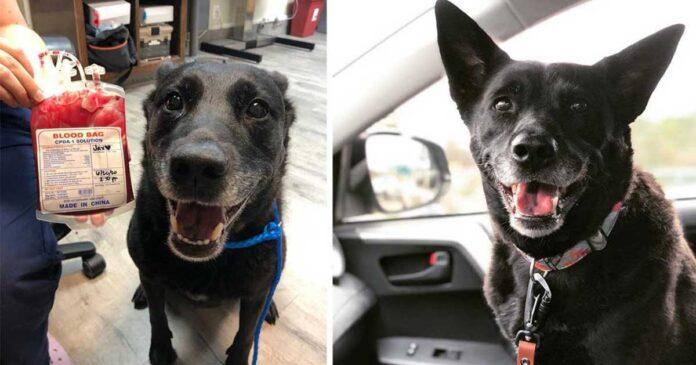 chien très heureux sauver chiot