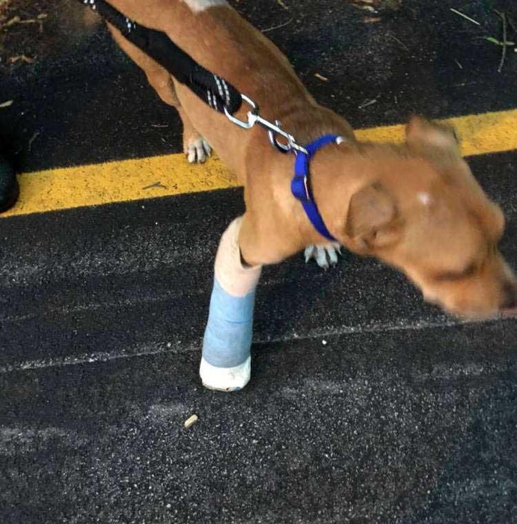 cycliste trouve chien blessé porté son dos