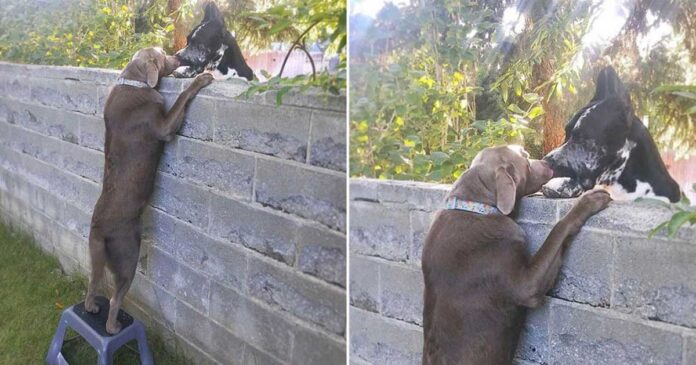famille donne tabouret chien visite chiens voisins