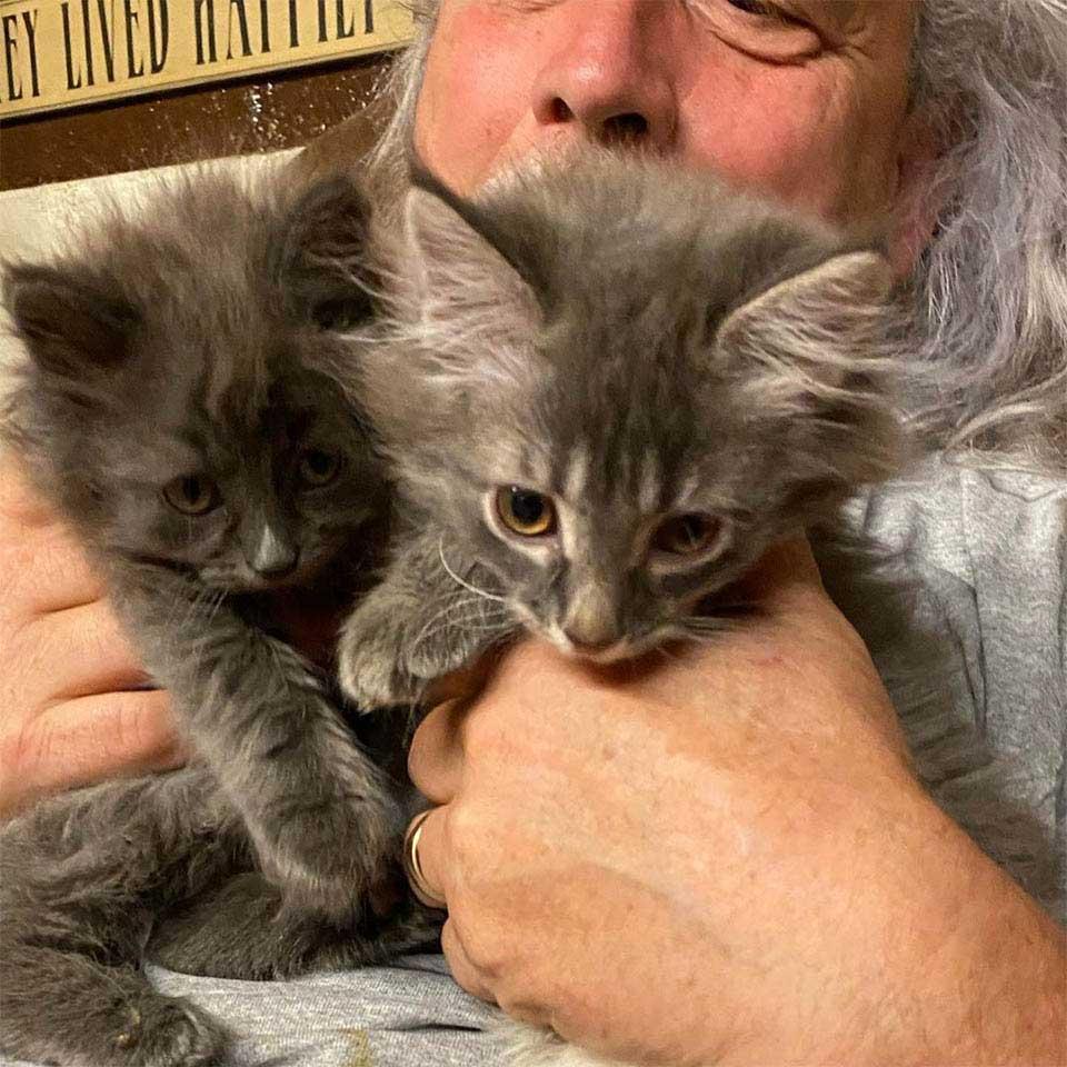 femme aide chaton errant chercher frère