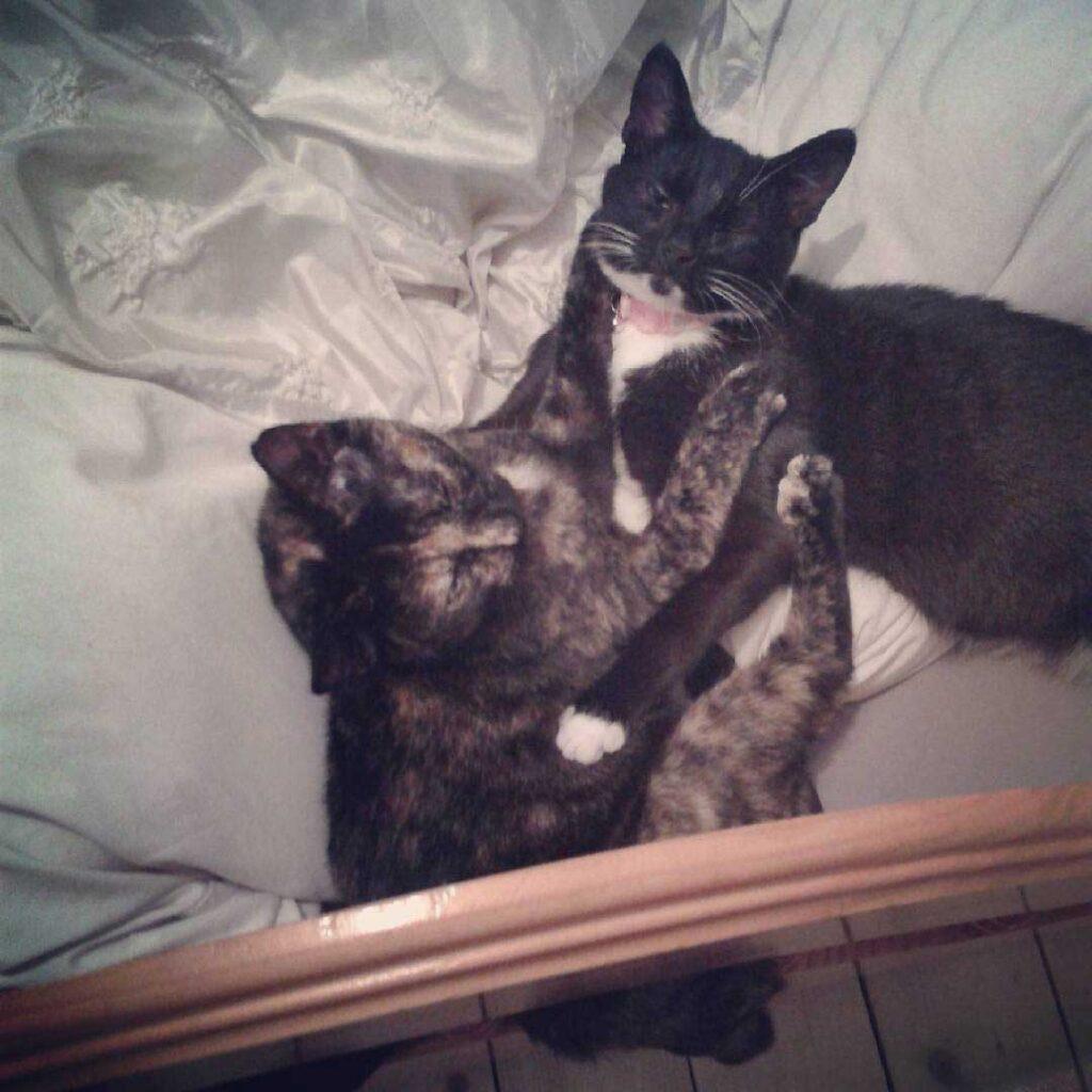 femme met traqueur chat
