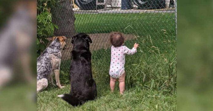 fille rejoint chiens recevoir cadeau voisin