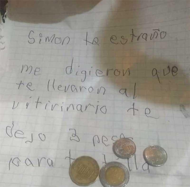 garçon écrit lettres émotionnelles refuge chien